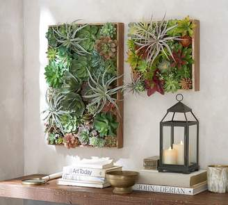 Pottery Barn Succulent Wall
