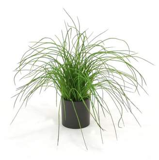 Distinctive Designs Grass in Pot