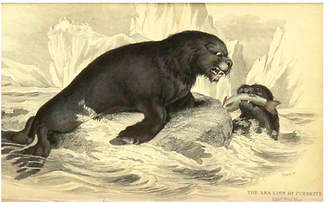 One Kings Lane Vintage Sea Lion with Mate - 1843