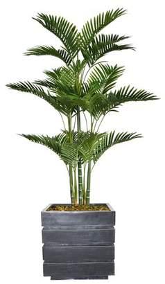 Bloomsbury Market Floor Palm Tree in Planter Base