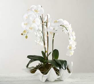 Pottery Barn Faux Potted Orchid In Clam