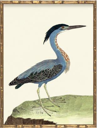 Serena & Lily Vintage Bird VII in Bamboo Frame by Whalebone Creek Prints