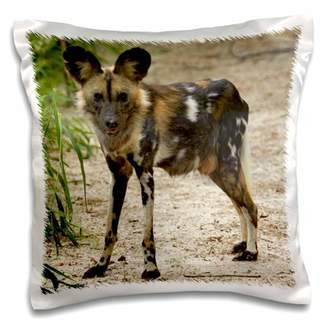 3dRose African Wild Dog, Painted Dog, Conservation Project, Zimbabwe, Africa - Pillow Case, 16 by 16-inch