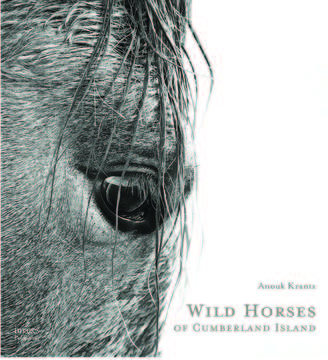 Acc Distribution Wild Horses Of Cumberland Island