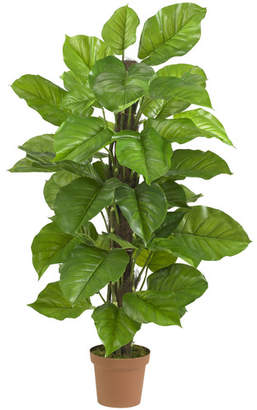Bayou Breeze Leaf Philodendron Tree in Pot
