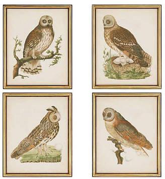 One Kings Lane Nozeman - Nozeman Owls
