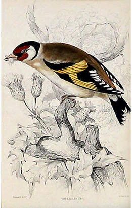 One Kings Lane Vintage Goldfinch - C. 1840