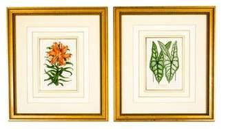 Pair of Framed Botanical Prints