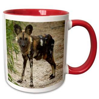 3dRose African Wild Dog, Painted Dog, Conservation Project, Zimbabwe, Africa - Two Tone Red Mug, 11-ounce