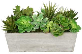 House of Silk Flowers Artificial Succulent in Planter Base