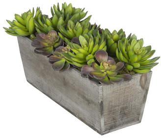 House of Silk Flowers Artificial Succulent Garden Desk Top Plant in Decorative Vase Base