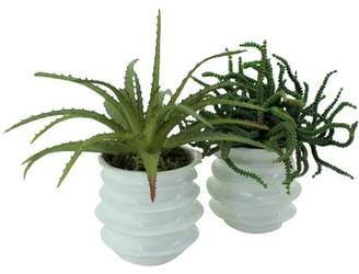 Bungalow Rose 2 Piece Succulent Plant in Ceramic Pot Set