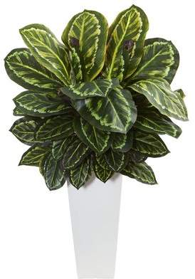 Orren Ellis Maranta Foliage Plant in Tower Vase
