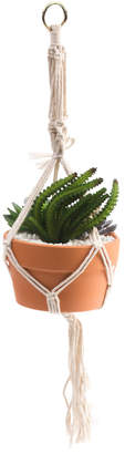 Hanging Small Succulent In Terracotta Pot