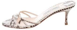 Jimmy Choo Snakeskin Slide Sandals