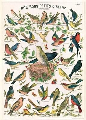 Cavallini & Co. Decorative Paper- Bird Chart 20x28 Inch Sheet