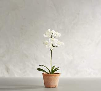 Pottery Barn Mini Faux Potted Orchid