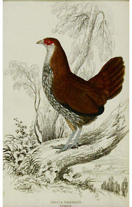 One Kings Lane Vintage Gray Junglefowl - 1843