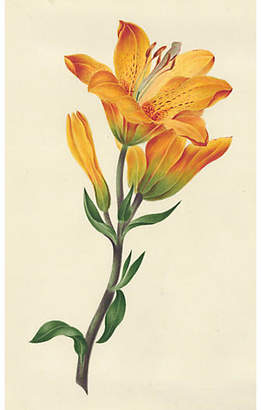 One Kings Lane Vintage 19th-C. Tiger Lily Watercolor