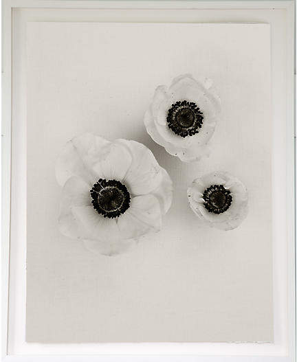 Anemones on Linen - Dawn Wolfe 42