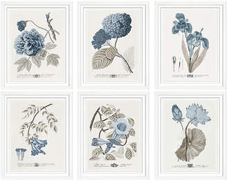 William Stafford Set of 6 Imperial Flowers II Art