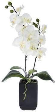 Homescapes Cream Artificial Orchid Flowers In Black Ceramic Pot
