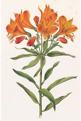 One Kings Lane Vintage Tiger Lily Chromolithograph - C. 1874