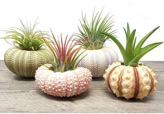 Amyove Urchin Shell Air Plant Flowerpot Home Office Decoration Christmas Gift 4PCS