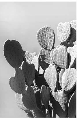 Pottery Barn Monochrome Desert Cactus Framed Print by Jane Wilder