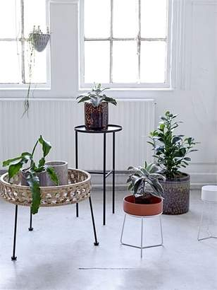 Lulu & Georgia Legare Tabletop Planter