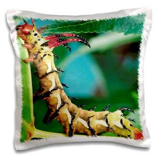 3dRose Hickory Horned Devil Caterpillar, Insect - NA02 DNO0211 - David Northcott - Pillow Case, 16 by 16-inch