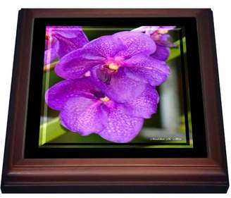 3dRose Purple Orchid Flowers - Photography Flowers, Trivet with Ceramic Tile, 8 by 8-inch