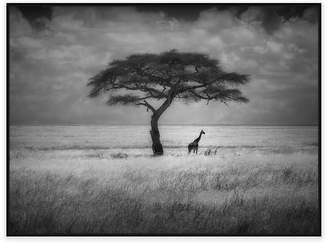 United Artworks Shady Tree Photographic Canvas Print With Floating Frame