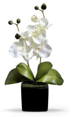 Camilla And Marc Homescapes Cream Artifical Orchid Flower In Black Pot, 35 Cm