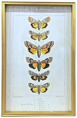 One Kings Lane Vintage Framed Nocturnal Butterfly Species Print - Vermilion Designs