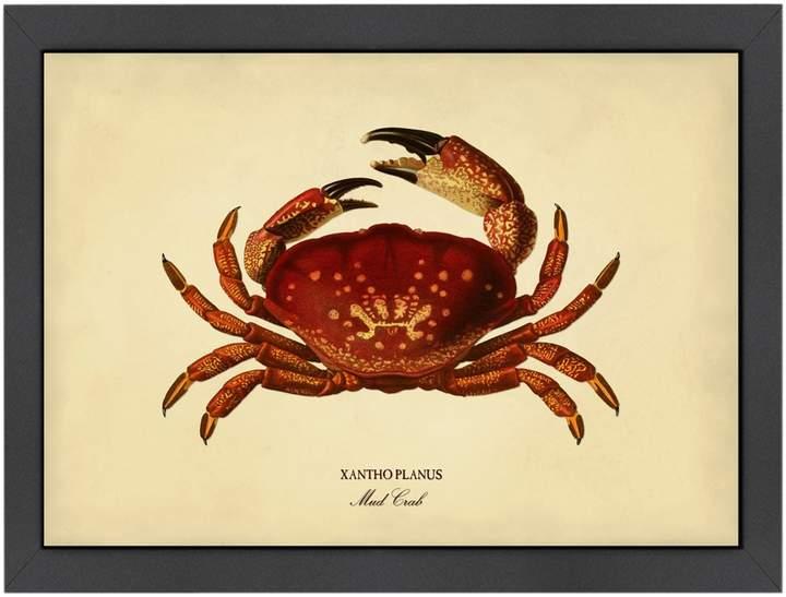 Americanflat Mud Crab by Coastal Print & Design (Framed Giclee)