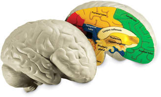 Learning Resources Inc Cross-Section Human Brain Model