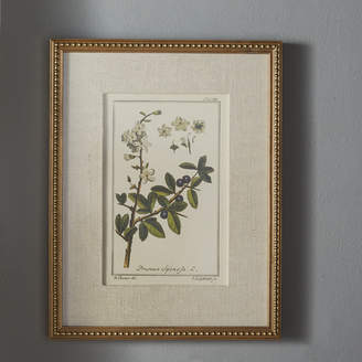 Three Posts 'Floral Botanical Study' 6 Piece Framed Graphic Art Set