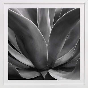 California Succulent Art Print