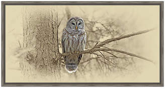 Asstd National Brand Barred Owl Framed Canvas Art
