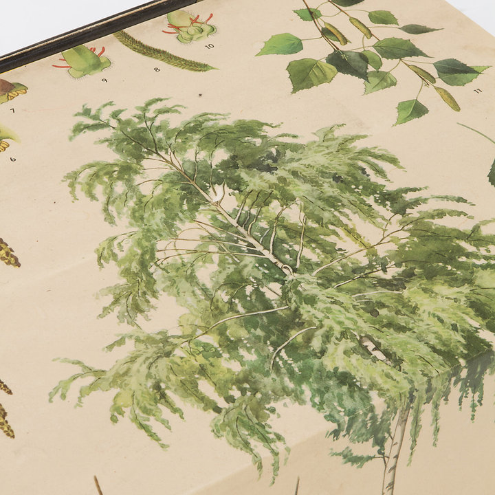 STUDY Botanical Table I