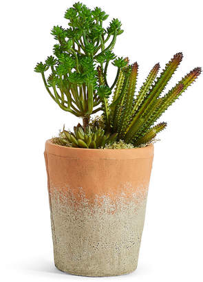 Marks and Spencer Succulent Garden in Tall Terracotta Pot