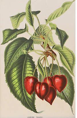 One Kings Lane Vintage Red Cherries with Stem - C. 1860