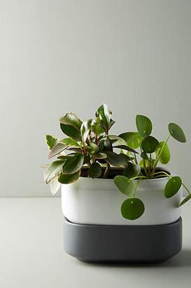 Anthropologie Chef'n Self-Watering Herb Planter