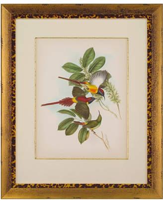 "John-Richard Collection Gould Birds of the Tropics I"" Giclee Wall Art"