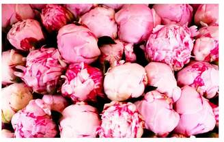 Pottery Barn Pink Peonies Framed Print by Rebecca Plotnick