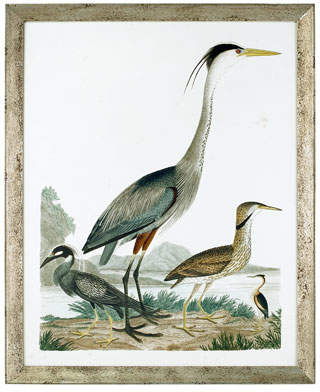 "John-Richard Collection Large Heron Family I"" Art Print"