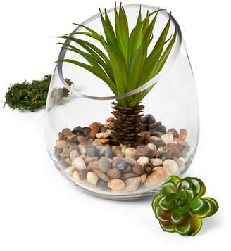 Home Essentials Glass Terrarium Kit