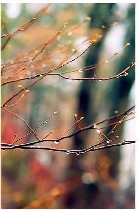Pottery Barn Autumn Branches Paper Print by Cindy Taylor
