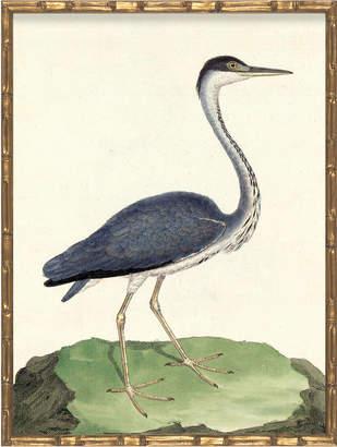 Serena & Lily Vintage Bird III in Bamboo Frame by Whalebone Creek Prints